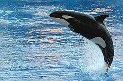 bálna kék tőkehalban enterobiosis inkubációs időszak hány nap