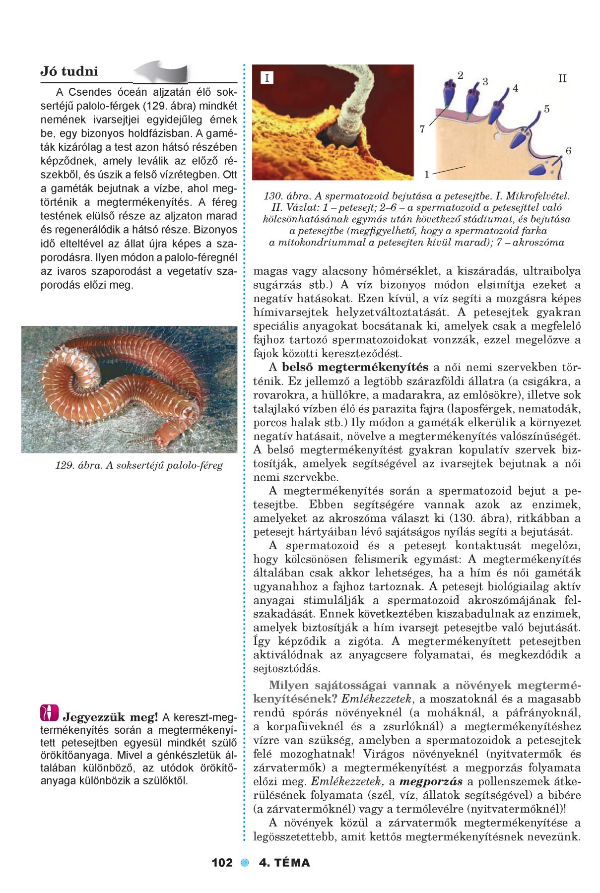 petesejtek és paraziták tünetei