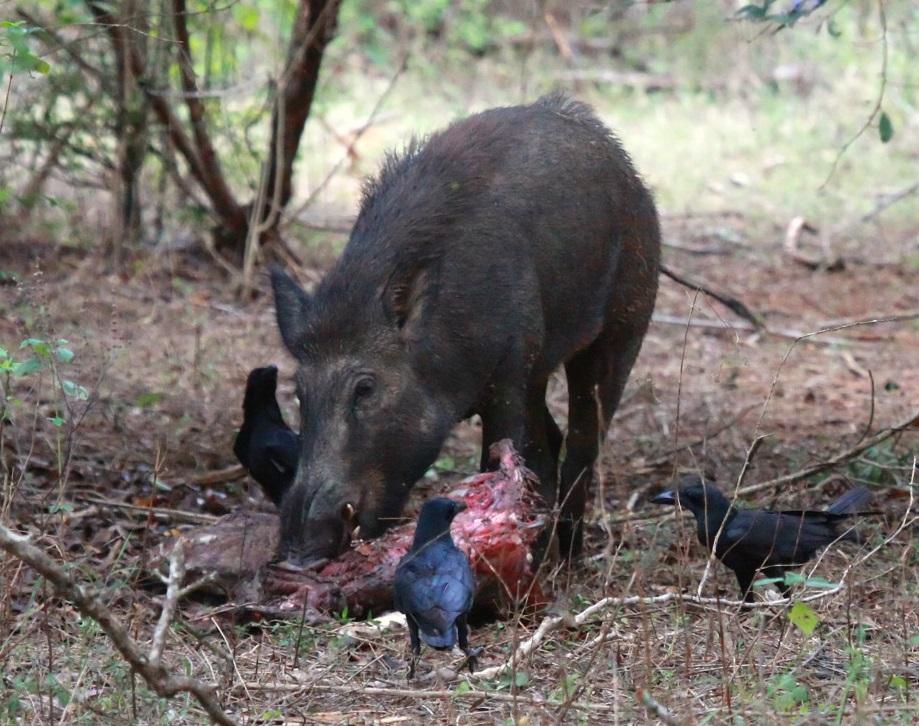 hús helmintiaszok
