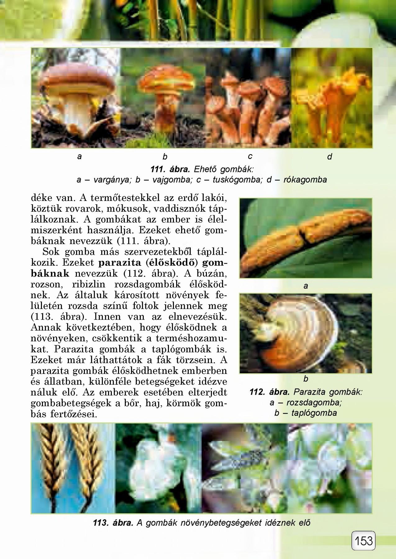Gyurusfergek puhatestuek, Puhatestűek – Wikipédia