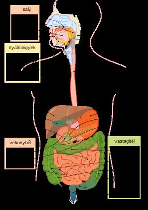hasnyálmirigy parazita gyógyszer