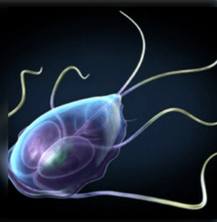 nekrózis tünetek felnőtteknél a paraziták jótékony hatásai