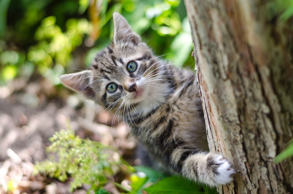 simptome giardia pisici belfereg kimutatasa verbol