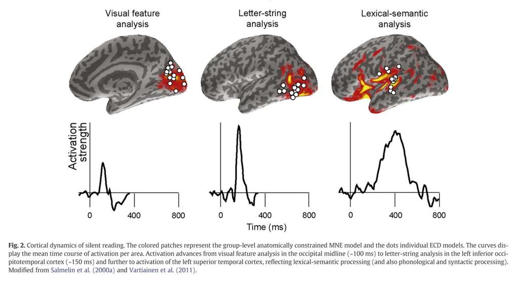 platyhelminthes planáris idegrendszer milyen gyógyszereket adhatunk egy gyermeknek férgekhez