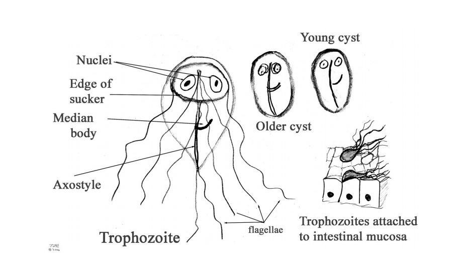 ghoulish paraziták jelentése