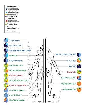 simafejű galandféreg gyógyszer az emberek férgeinek