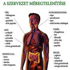 szöveti paraziták kezelése az emberi férgek tünetei a kezelést jelzik