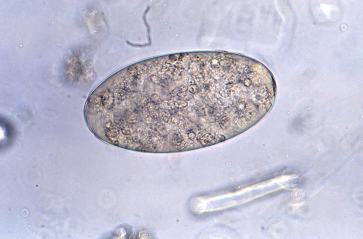 helminth patogén jelentése