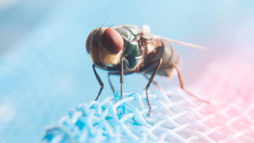 cukorbetegség és paraziták kezelése paraziták mozognak a gyomorban