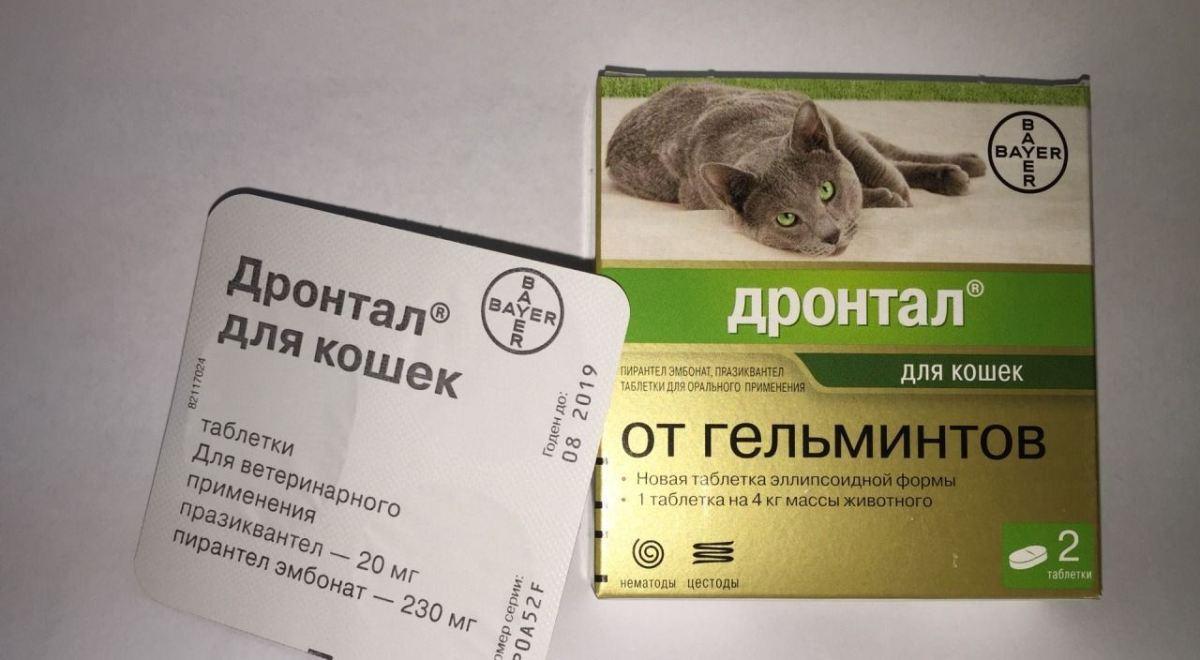 hogyan válasszunk gyógyszert férgek számára