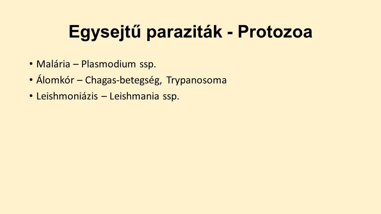 protozoan paraziták a székletben a férgektől a rókagombák ginzeng tinktúrájából