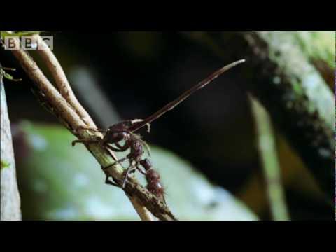 miért jelennek meg gyakran a pinworms