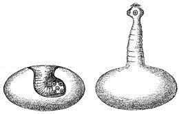 cernagiliszta gyógyszer veny nelkul helminthiasis formák