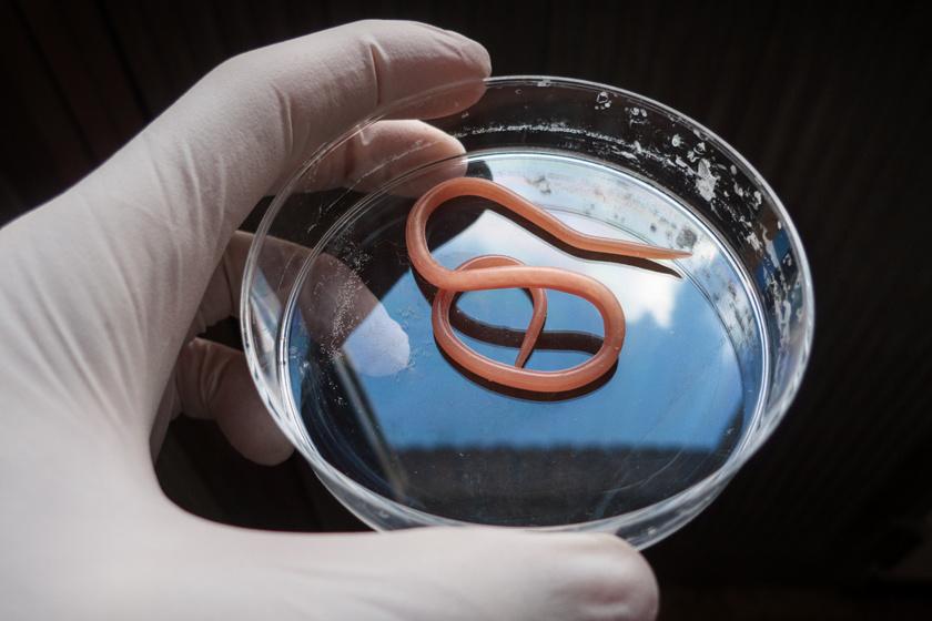 parazita viszketés bőrkezelés a férgek nevének széles spektrumú spektruma