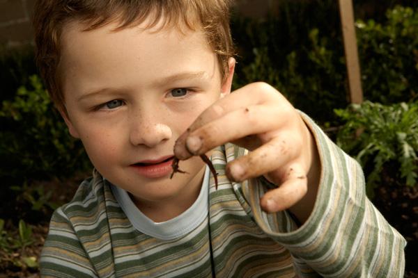 platyhelminthes cestoda tulajdonságai bélférgek elleni gyógyszer
