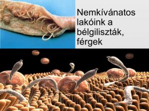 férgek tinkturaja parazitákbol)