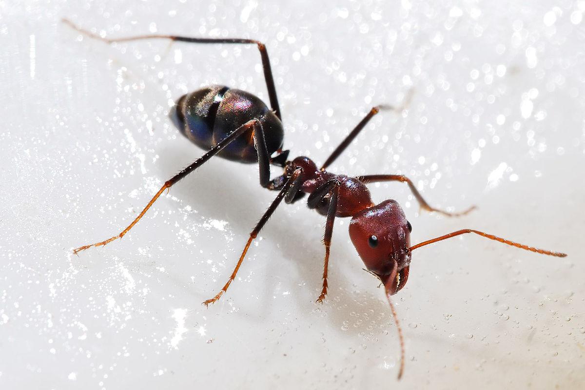 hogyan lehet kihozni férgeket együtt fejlődő paraziták