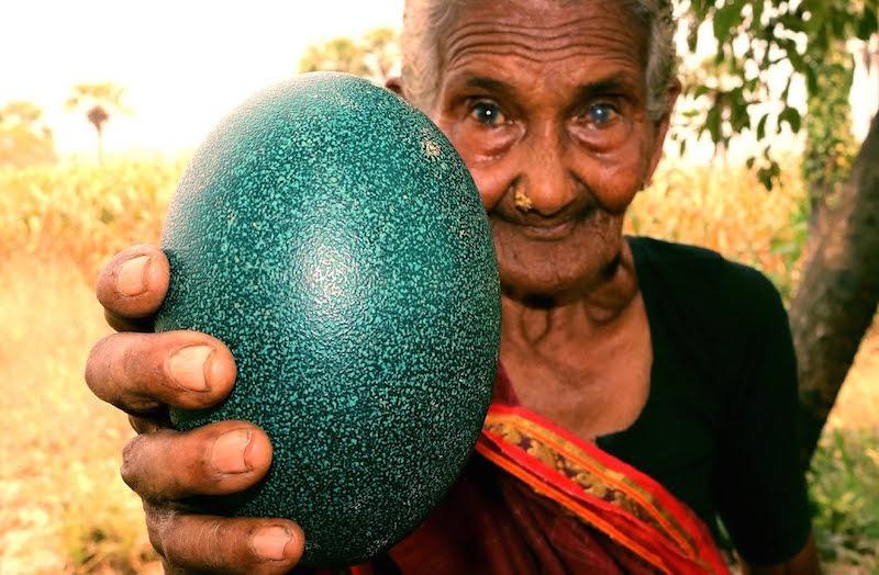 trichocephalosis tojás mérete paraziták emberben antibiotikumokkal kezelve