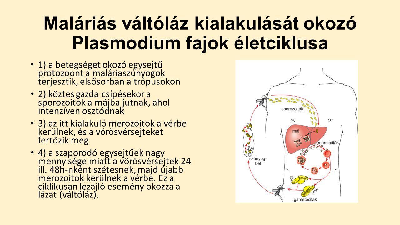 giardia treatment reddit Ugra féreg gyógyszer