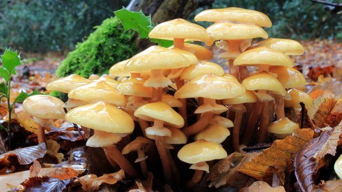 megszabadulni a gombák parazitáitól