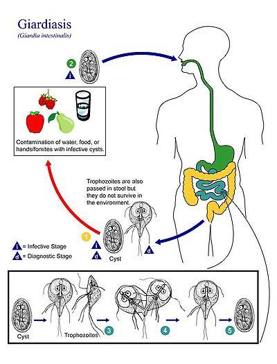 anthelmintikus gyógyszerek sokféle ember számára
