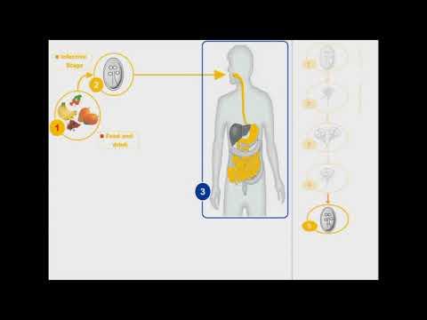 giardiasis life cycle animation férgek és a férgek kezelése gyermeken