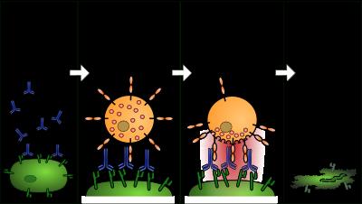 a paraziták ellen az emberi testterápiában