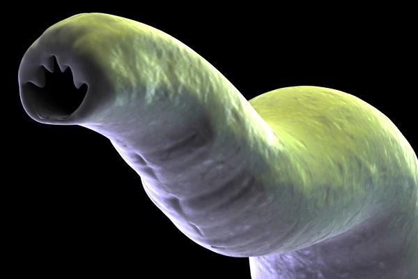 hogy megtisztítsák a férgek testét a paraziták agyának megtisztítása