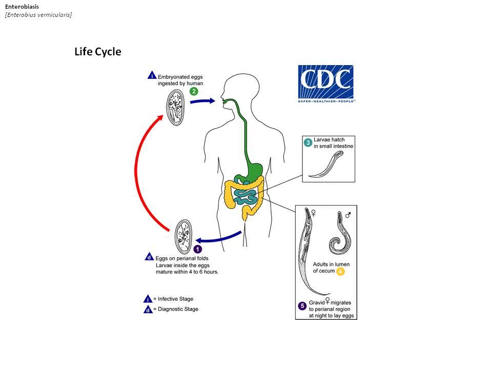 harmadik világbeli paraziták új generációs tabletták férgektől