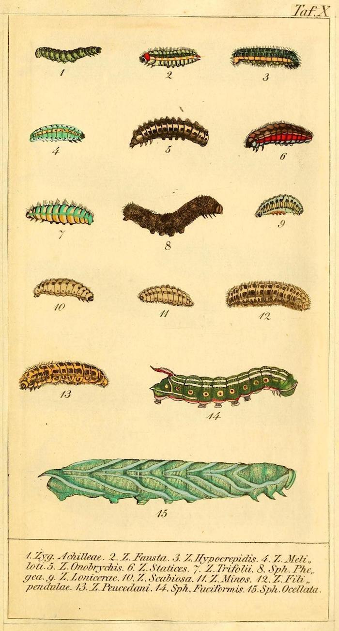példa a platyhelminthes állatokra paragone megtisztítja a parazitákat