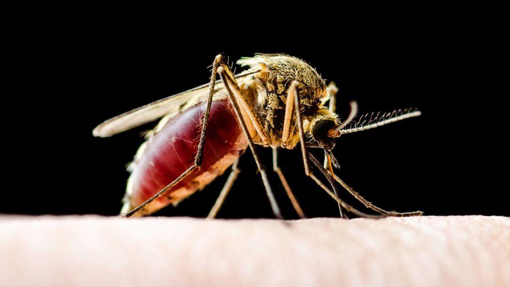 emberről emberre terjedő paraziták