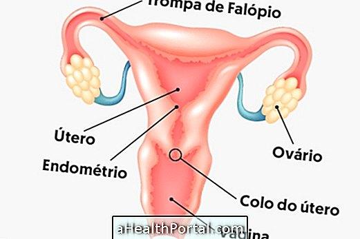 fascioliasis tünetei és kezelése
