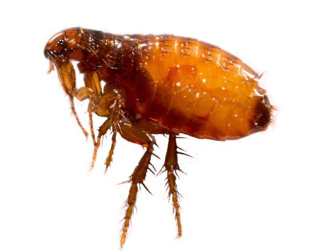 fakezelés a paraziták számára