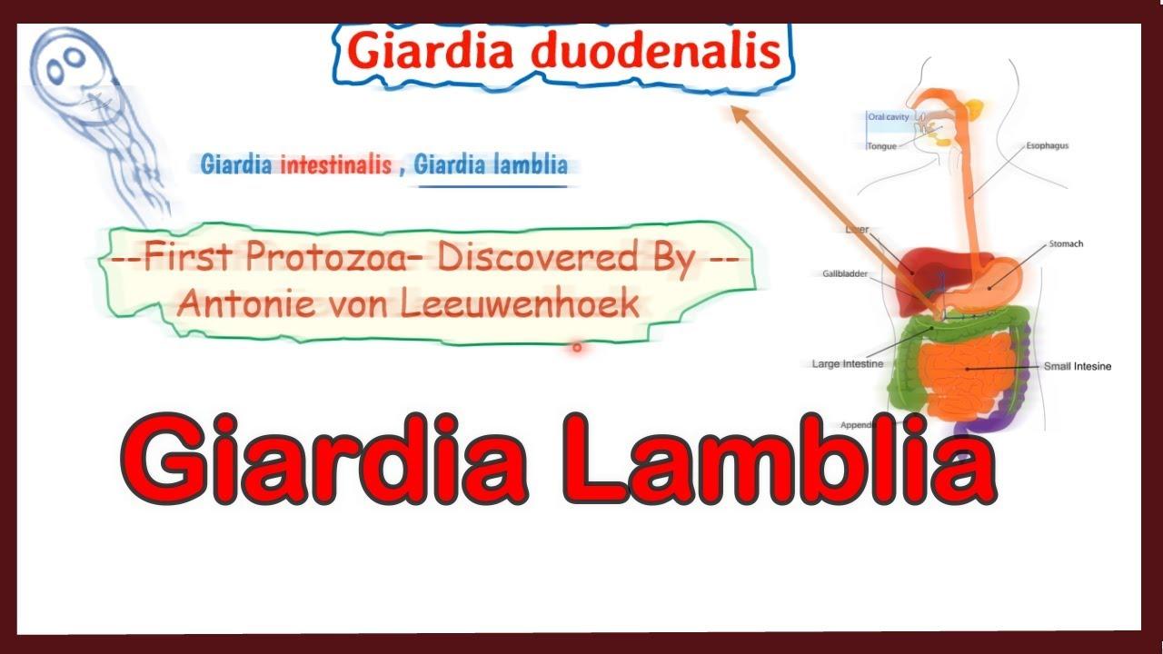 giardia gallbladder