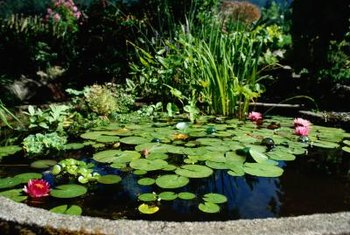 giardia in pond water férgek típusú férgek emberben tabletta