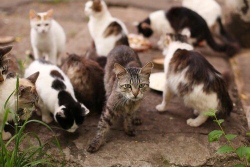 giardia sintomas gatos a giardiasis forrásai