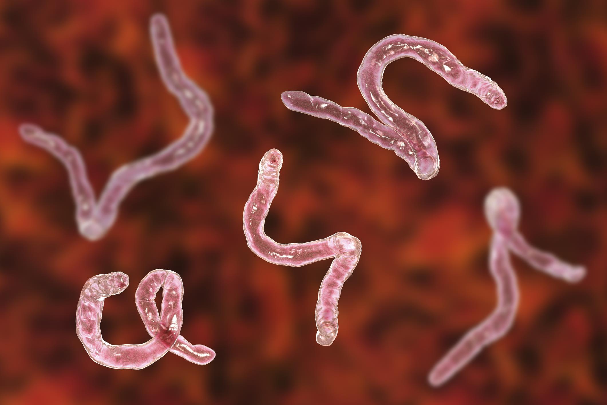 Sintomas de helminthosporium turcicum Helminthosporium turcicum milho controle