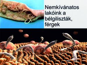belfereg tojas dipyllobothriasis fertőzés forrása