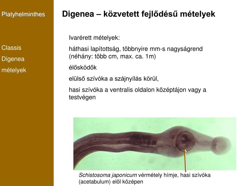 élet alakja platyhelminthes