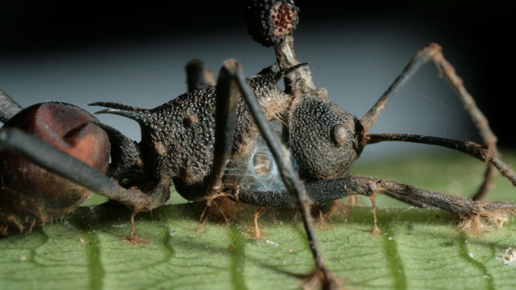 parazita áldozat