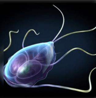 paraziták az emberi test tünetei