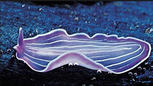 Ascaris tabletta szükséges a férgek megmérgezése a megelőzés érdekében
