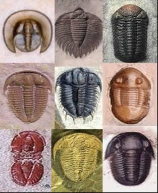 platyhelminthes típusú testterv minden típusú bél parazita