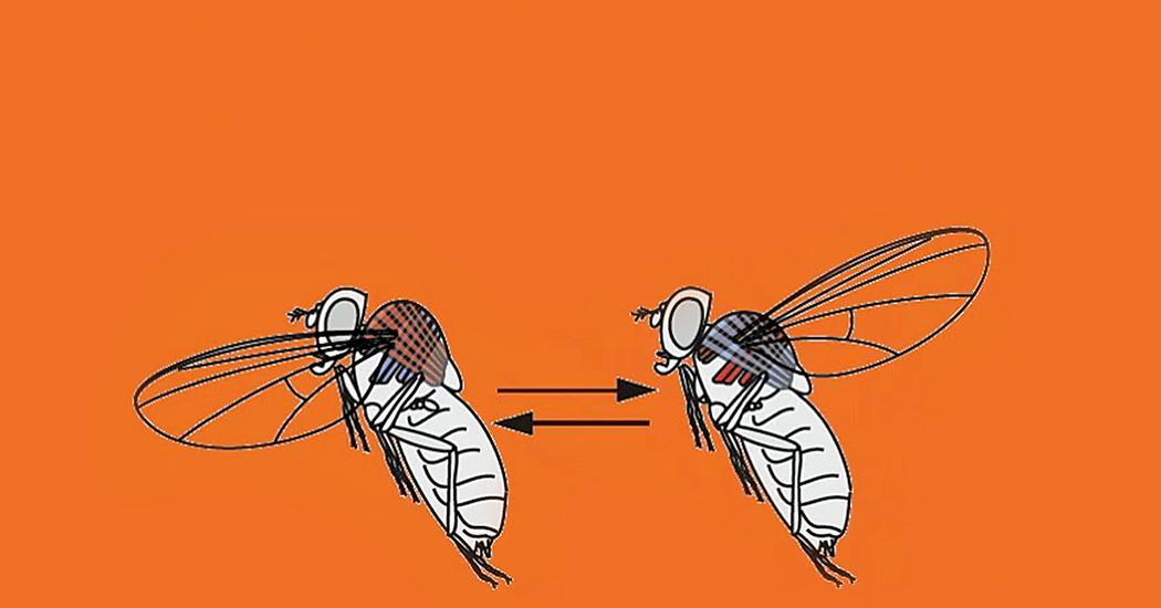 rovar paraziták példák
