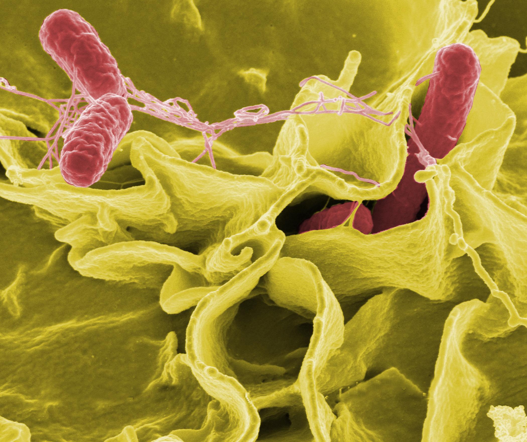 helmint paraziták paraziták kezelése a klinikán