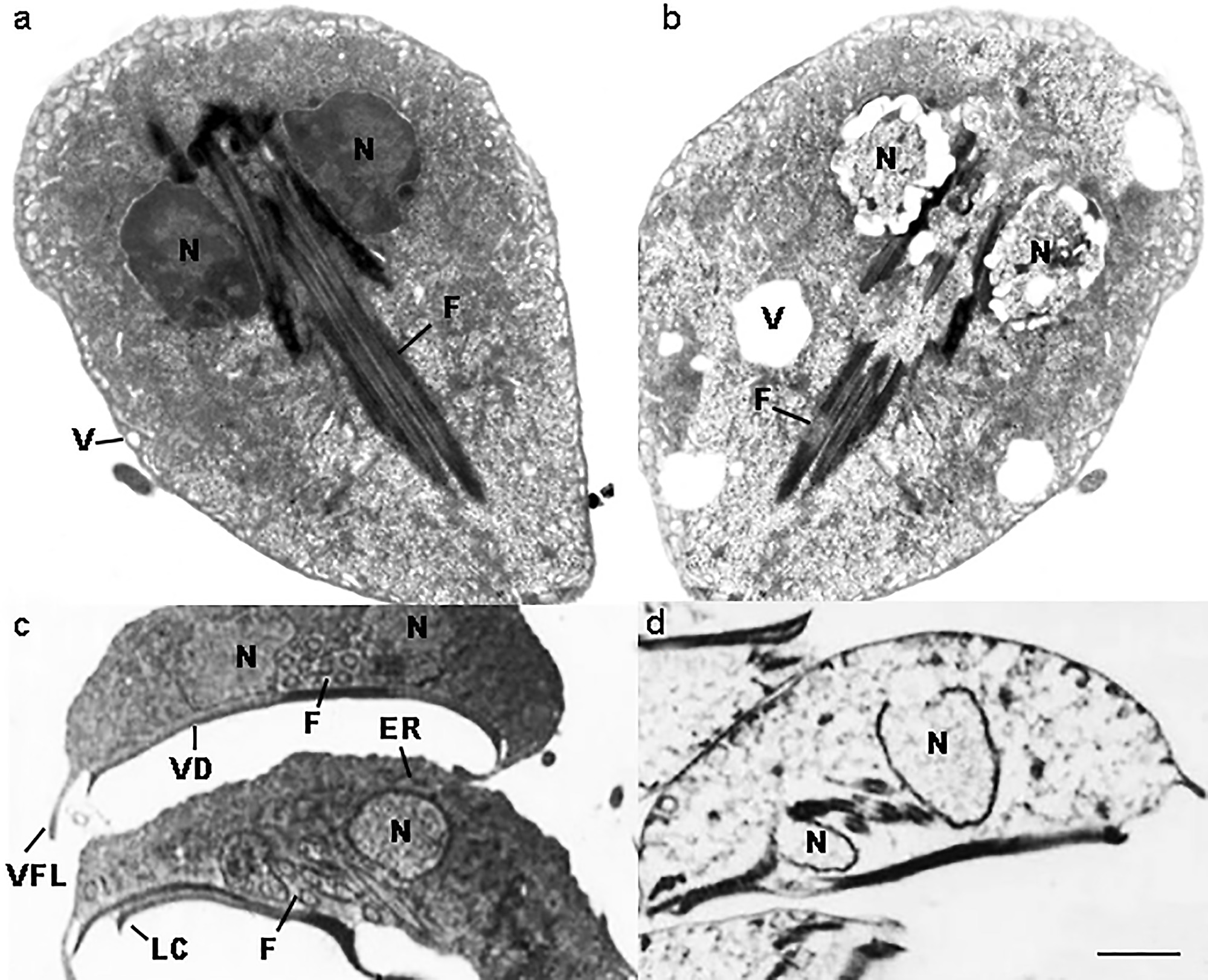 fogyás méregtelenítés kiegészítők parazita áldozat