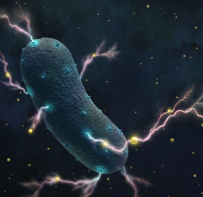 a zapper paraziták áttekintése áttétes rák jelentése bengáli nyelven