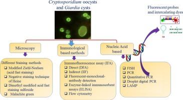 cryptosporidium and giardia antigen giardia symptoms pregnancy