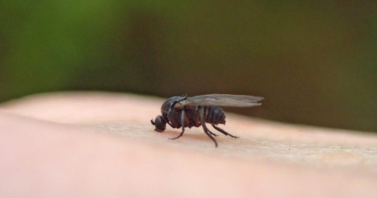 paraziták gazdái és betegségei