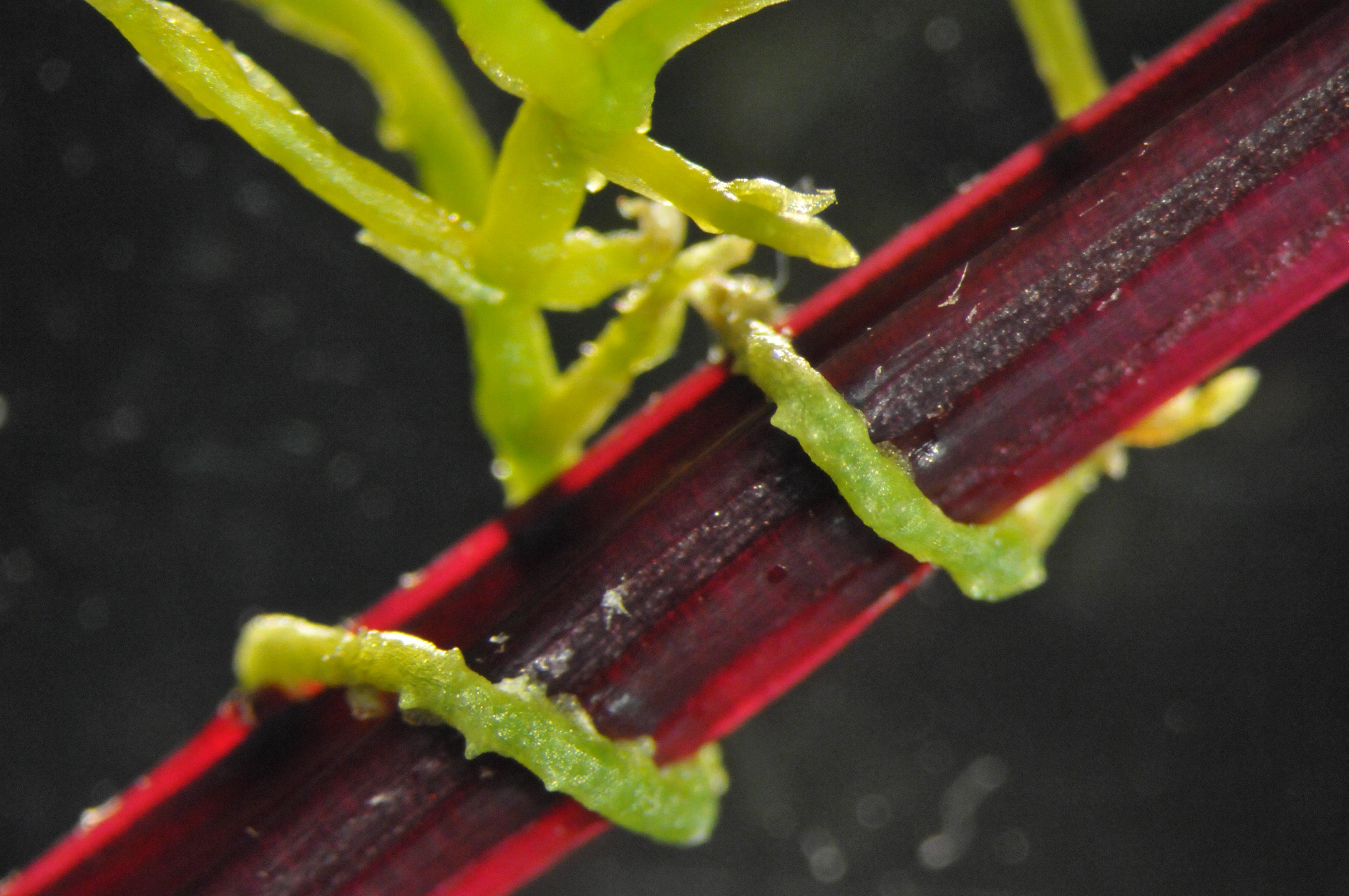 parazita áldozat hogyan lehet kiuriteni a parazitákat a tudobol